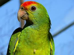 amazon endangered animals