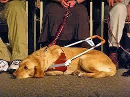 dog for blind