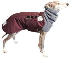 greyhound clothes