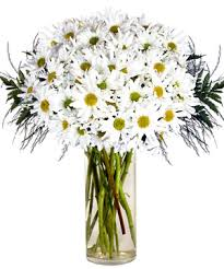 white daisies bouquet