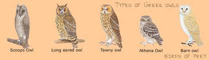 all types of owls