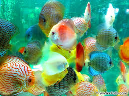 aquatic fishes