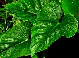 botanical plant