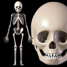 child skeleton