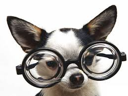 funny pets photos