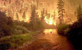 photos of forest fires