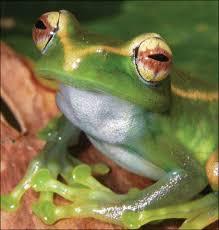 different amphibians