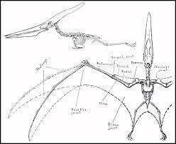 pterodactyl bones
