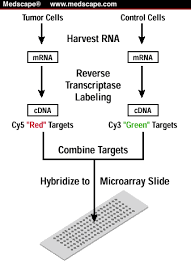 microarray technique