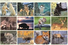 pictures of animals in the wild