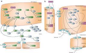 cholesterol metabolism