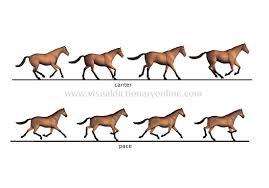 animal gaits