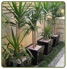 indoor plant picture