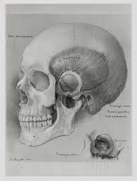 medical drawing