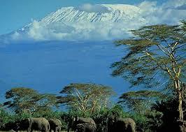 mt kilimanjaro animals