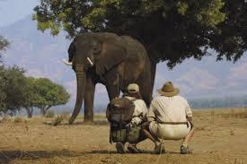 african safari clothes