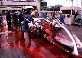 japanese whaling ships