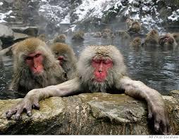 monkeys pichers
