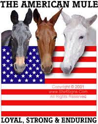 animal mules