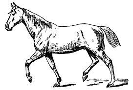 black and white horse clip art
