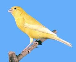 different breeds of birds
