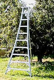 apple picking ladder