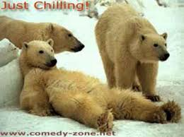 funny animal photographs