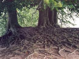 picture of roots