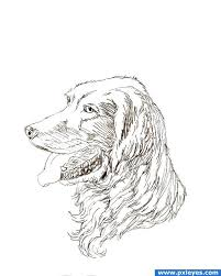 learn to draw dogs