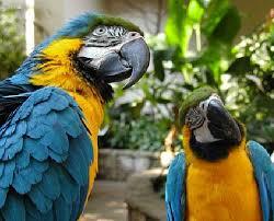 indoor birds
