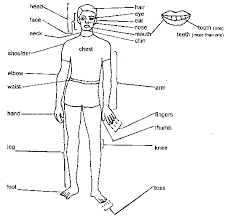 parts of the body images