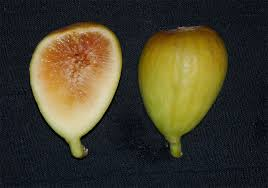 fig picture
