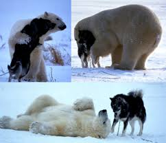 pictures of polar animals