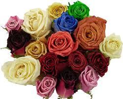 dried rose