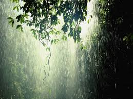 picture of a rain forest