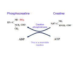 creatine phosphate atp