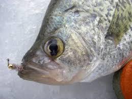ice fishing flies
