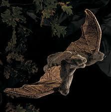 bat puppet