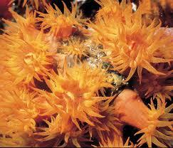 invertebrados marinos