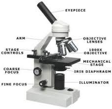 binocular compound microscope