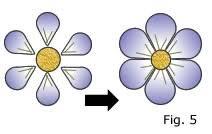 6 petal flower