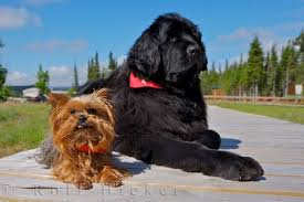 small brown dogs