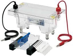 agarose gel electrophoresis apparatus