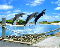 dolphin party