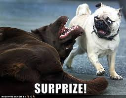 images of funny dogs