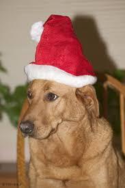 christmas dog pics