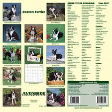boston terrier calendars