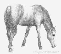 horse drawings in pencil