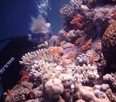jeddah red sea