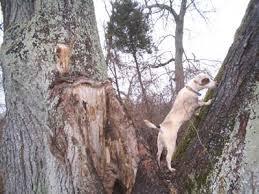 lamping deer